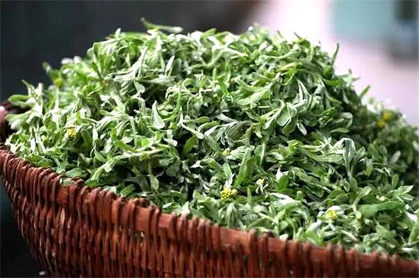 棉菜图源:温州发布
